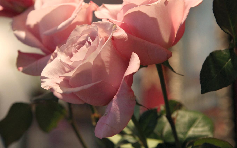 Altijd Bloemen, bloemist in Blaricum - bruidsboeket bestellen 2